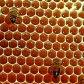 У пчел выделяется воск
