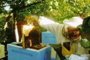 Деление пчелиной семьи пополам