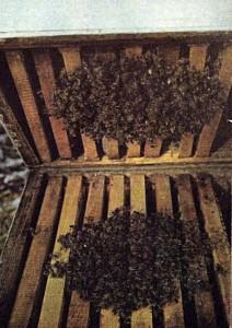 Осенне - зимний клуб пчел