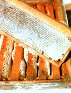 Мед - ценнейший продукт медоносных пчел