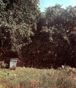 Налет роя пчел на улей