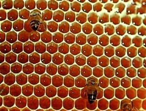 Соты со свежим медом