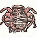 Муха - браула