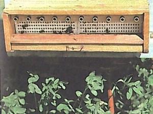 Установка на улей пыльцеуловителя