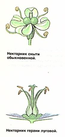Нектар